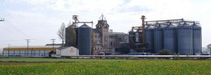 Landscape of Villanueva de Gallego's mill
