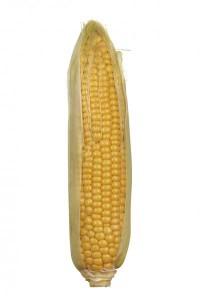 Espiga de maíz