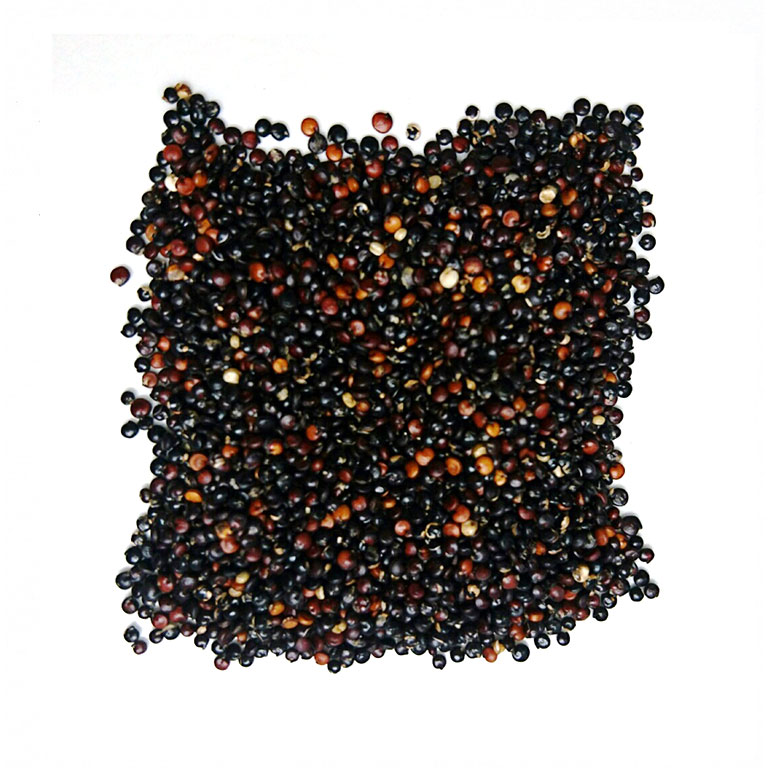 Semillas de quinoa negra